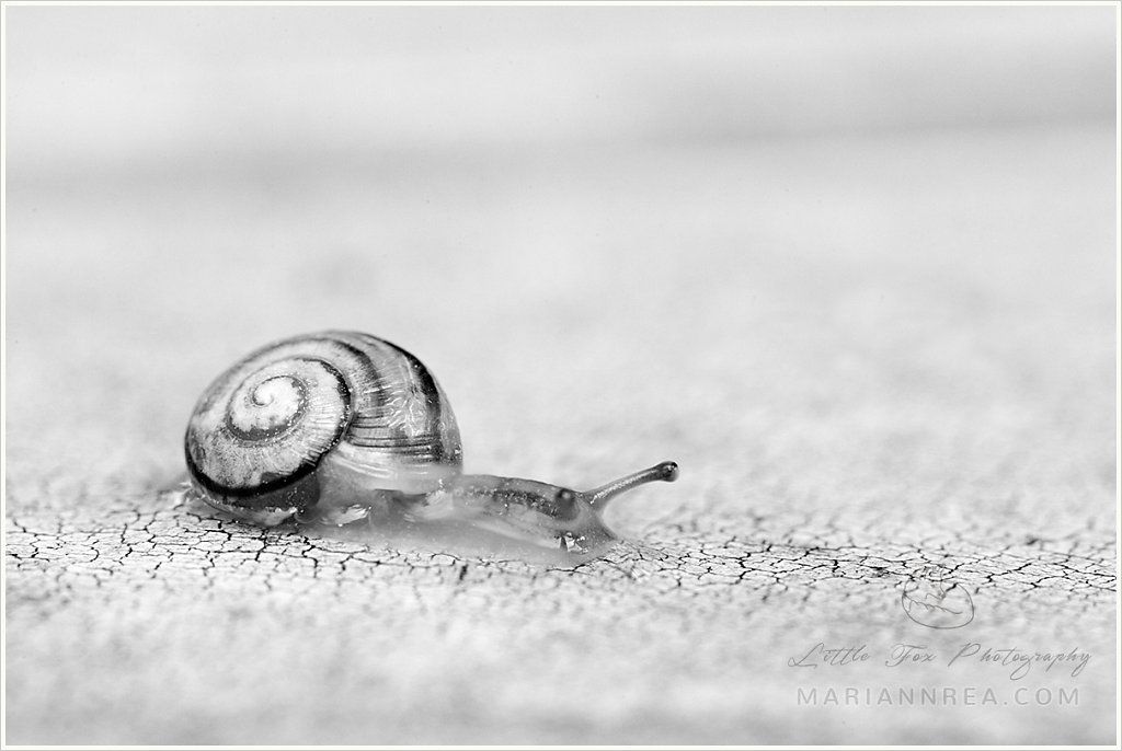 Tiny traveller