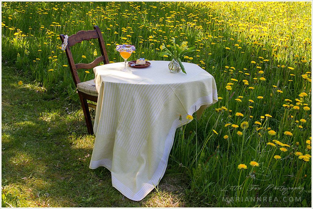Afternoon treat in a dandelion field