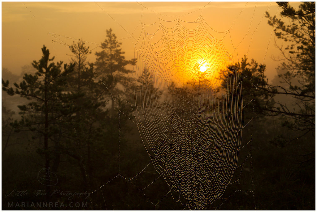 Webbed sunrise
