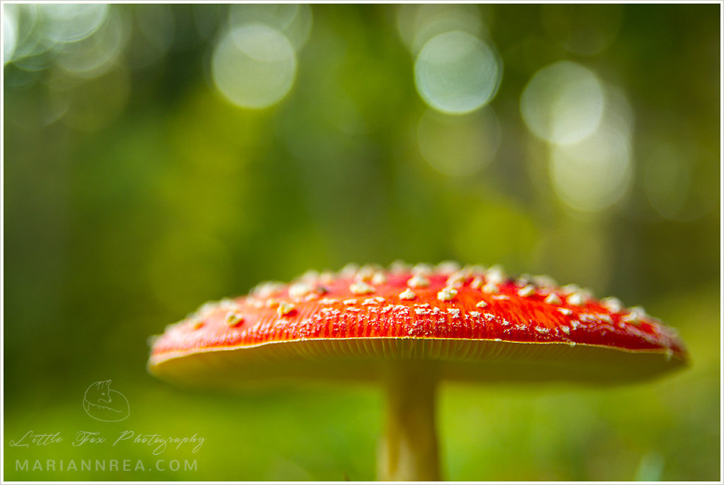 Poisonous bokeh