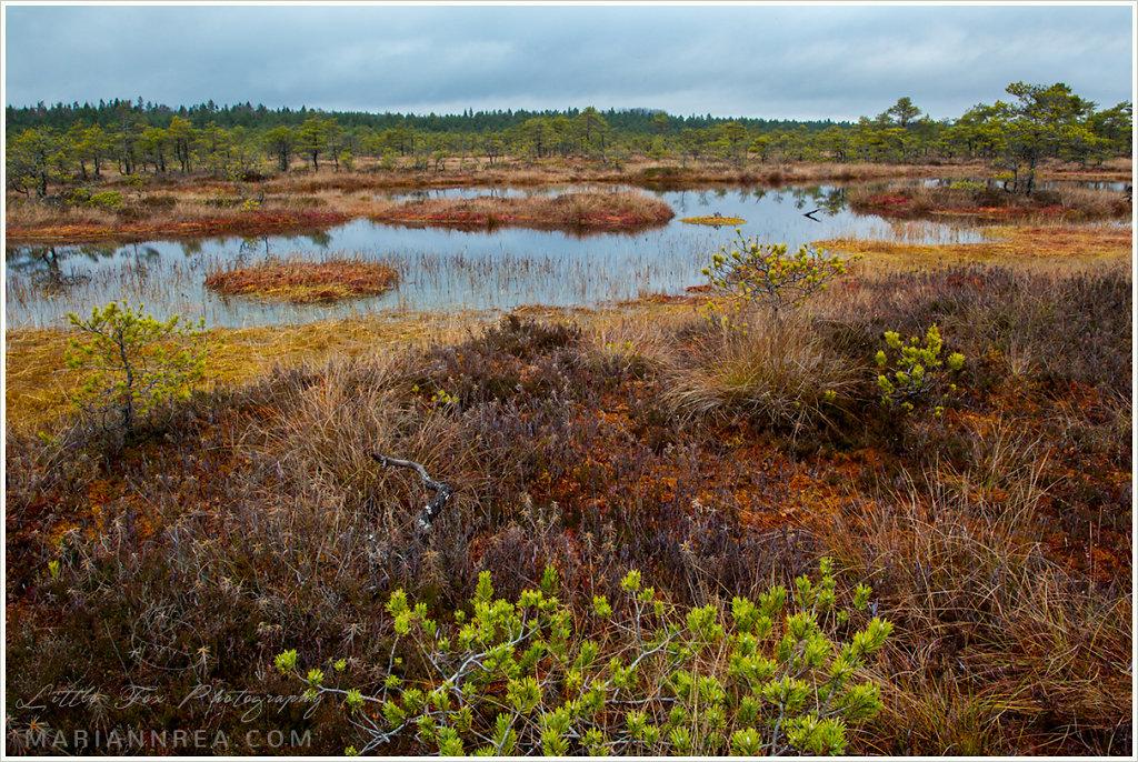 Autumn in a bog